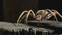 charlotte the spider.jpg