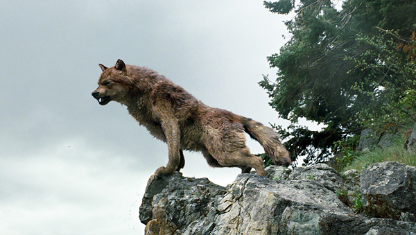 Cool Wolf Pack Pictures